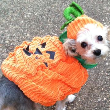 Pets Love Halloween Too!