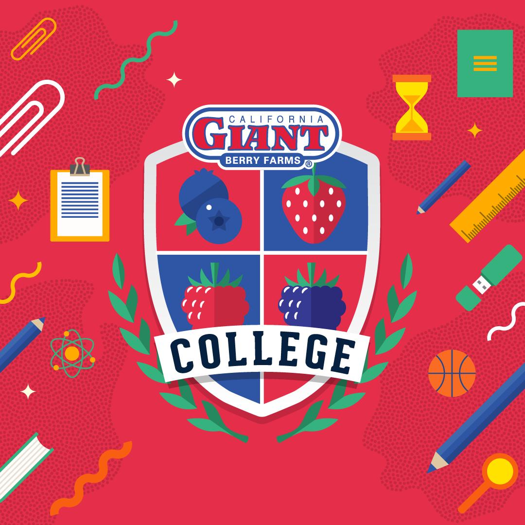 CG-College_IGcover_1080x1080